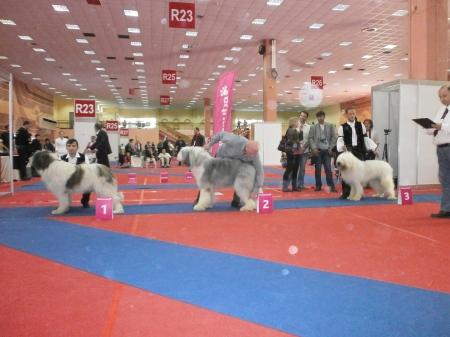 IORDAN DE GOTCA  EDS BUCURESTI 2012 LOC 2 CLASA INTERMEDIARA!